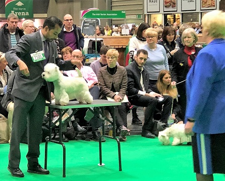 KatCrufts2018table.jpg